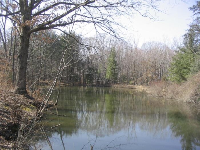 My Pond_1
